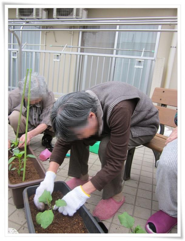 苗の植え替え