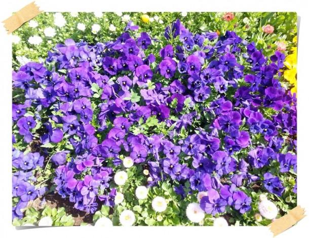 ぬくもりの花壇