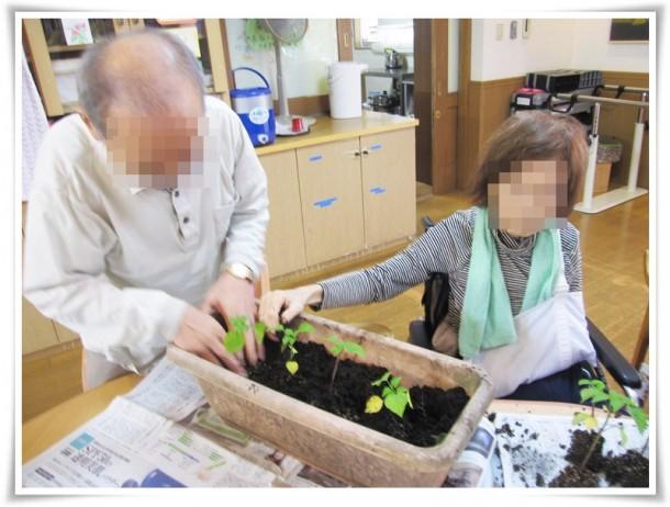植木鉢に苗植え