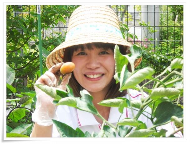 中庭に植えた野菜