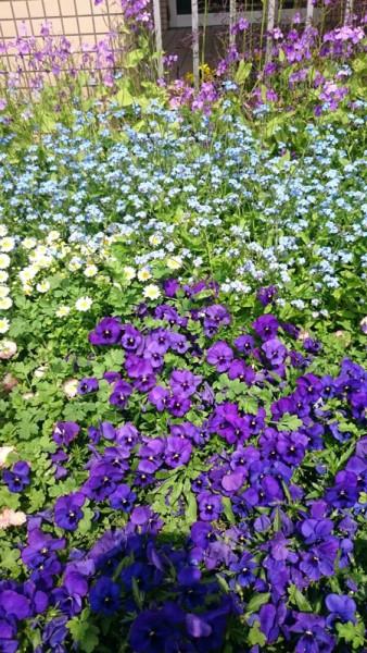 ぬくもりの園の花壇