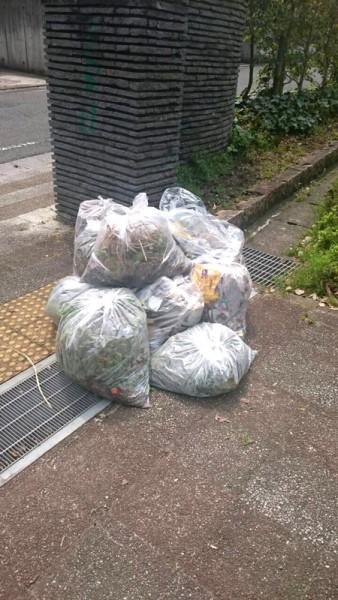 ゴミ掃除に参加