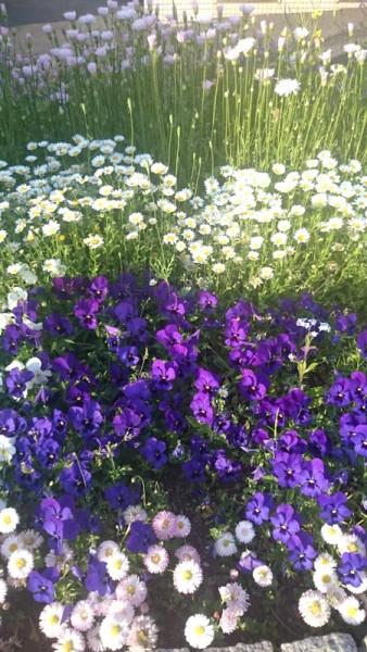 春の花壇コンクール