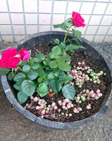 お花をリニューアル