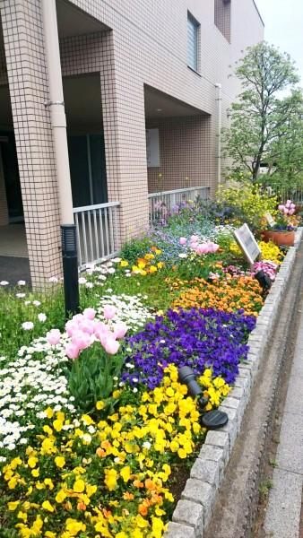 ぬくもり園の春