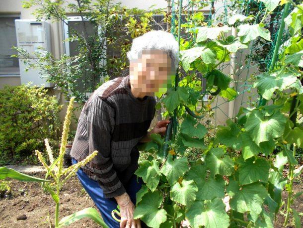 中庭で育ててるお野菜が大収穫です!